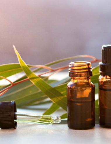 Purifica l'aria con l'olio essenziale di eucalipto