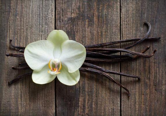 vaniglia olio essenziale