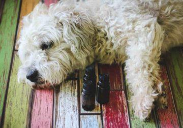 oli essenziali cani
