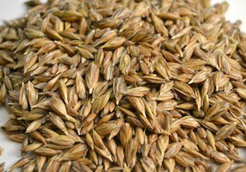 La farina di farro, il cereale forte usato fin dall'antichità