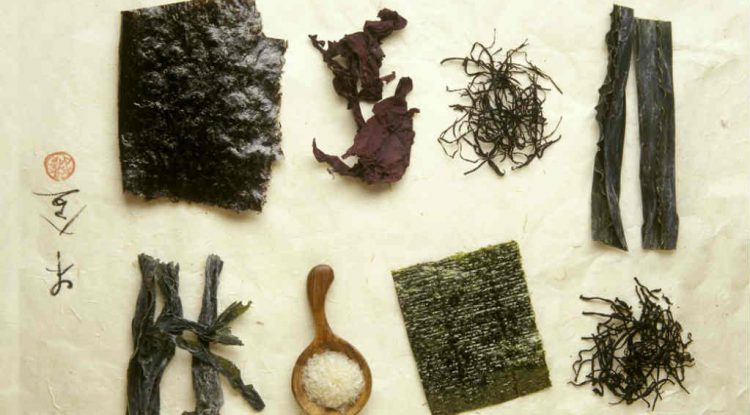 alga kombu alimenti