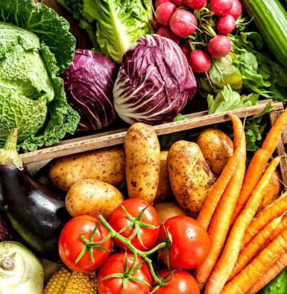 Gardroid: l'app perfetta per cominciare a coltivare il tuo orto