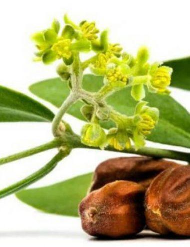 Olio di jojoba, cos'è e che funzioni ha nella formulazione dei prodotti cosmetici