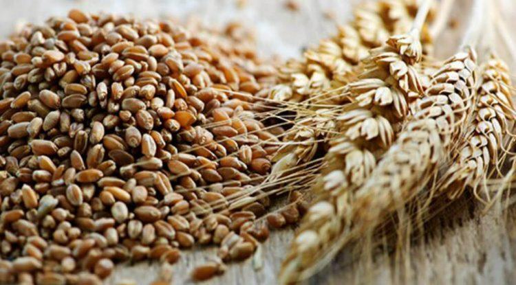 grano saragolla