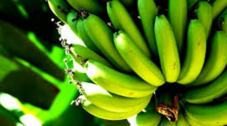 farina di banane verdi