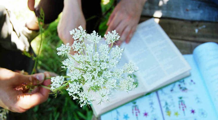herbarium app