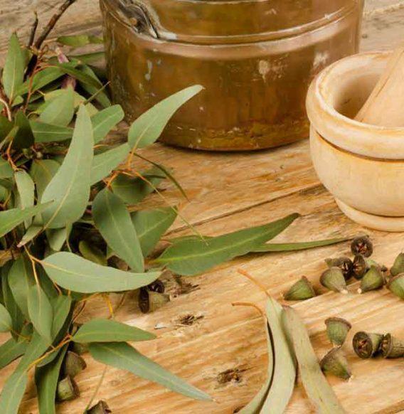 Olio essenziale di eucalipto: quali sono le proprietà e come utilizzarlo