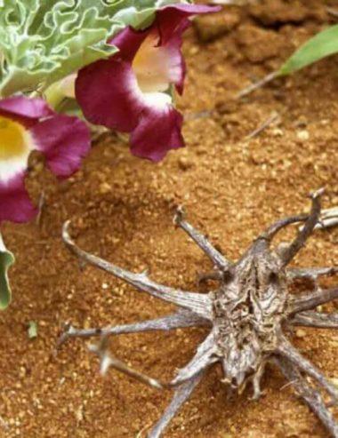 Artiglio del diavolo, la cura naturale per artrite e dolori reumatici