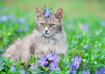 repellente per gatti
