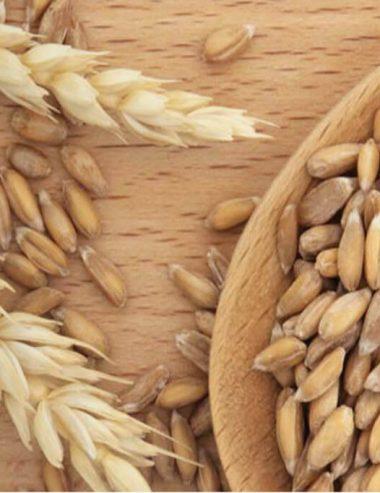 Farro spelta, l'antenato della farina di grano tenero che arriva da Oriente