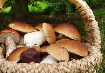 Funghi: perché mangiarli fa bene alla salute e rinforza l'organismo