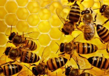 agenda dell'apicoltore applicazioni