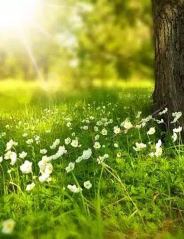 Primavera, tempo di raccogliere le erbe spontanee