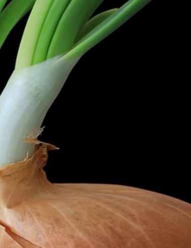 Cipolla germogliata? Scopri come utilizzarla in cucina e nell'orto!