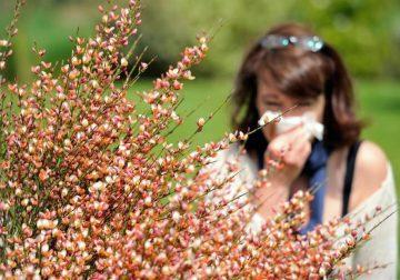 allergie o raffreddore