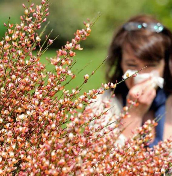 Raffreddore o allergia stagionale? Impara a distinguerli