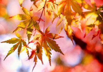 oli-essenziali-autunno