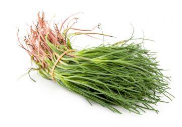 Agretti, ecco perché non sono solo una semplice erba spontanea