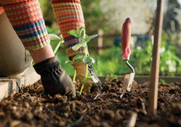gardenize app