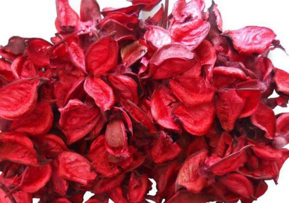 fiori secchi cosmetici