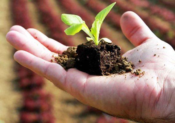 agricoltura-natura-smartphone