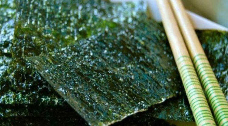 alga nori