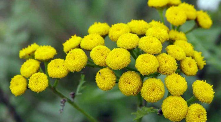 rimedi-naturali-piante