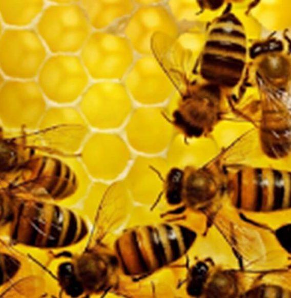 Agenda dell'Apicoltore, l'applicazione che monitora le tue api
