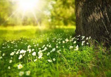 erbe di primavera