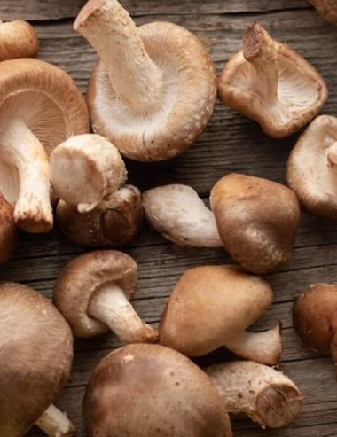 Funghi shitake: dalle querce del Giappone alle cucine di tutto il mondo