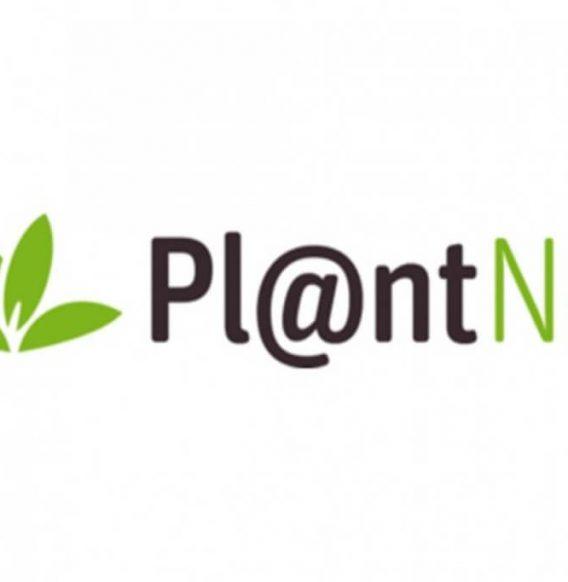 PlantNet, l'applicazione che ti aiuta a riconoscere la natura